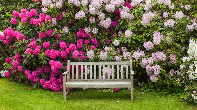 rhododendronerde kaufen und liefern lassen