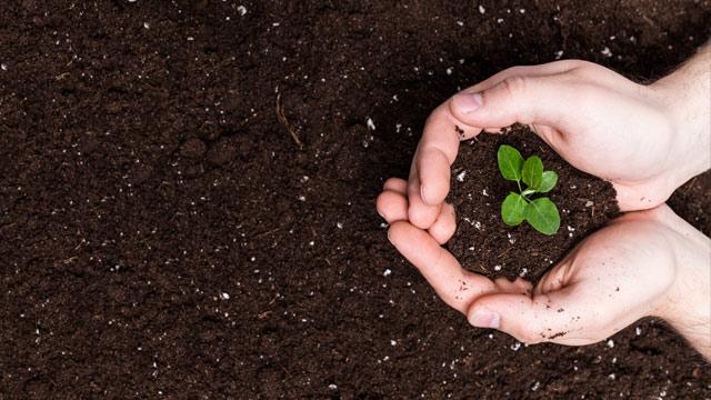 Komposterde und Bodenverbesserer kaufen und liefern lassen