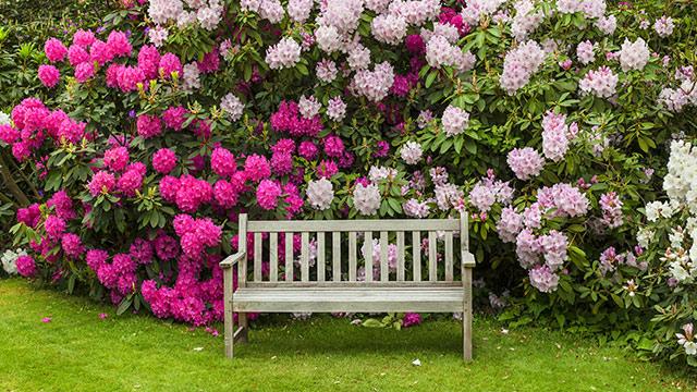 Rhododendronerde Die perfekte Erde für Rhododendron